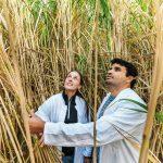 Agroalimentare sostenibile e responsabile grazie all'intervento delle startup