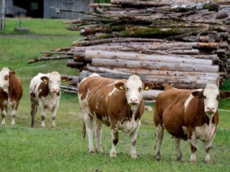 tracciamento bestiame blockchain