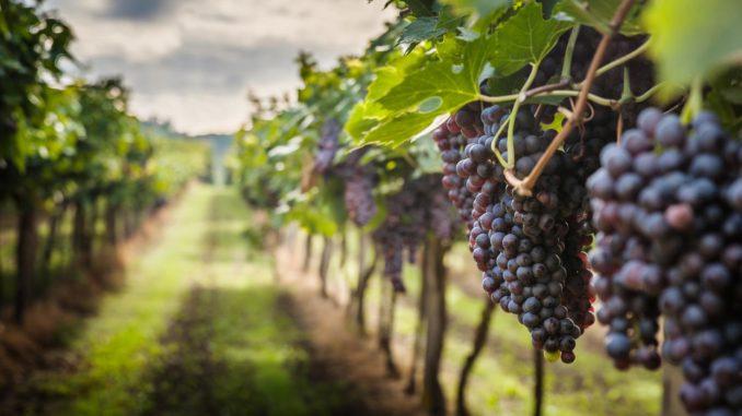 viticoltura macchine